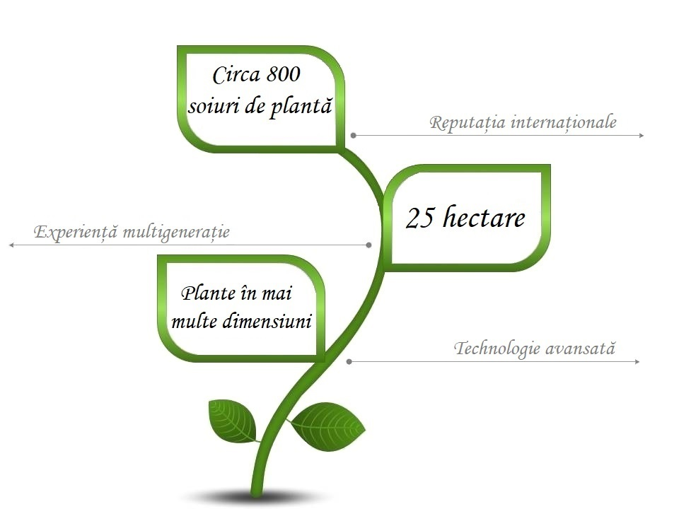 infographic-román-1