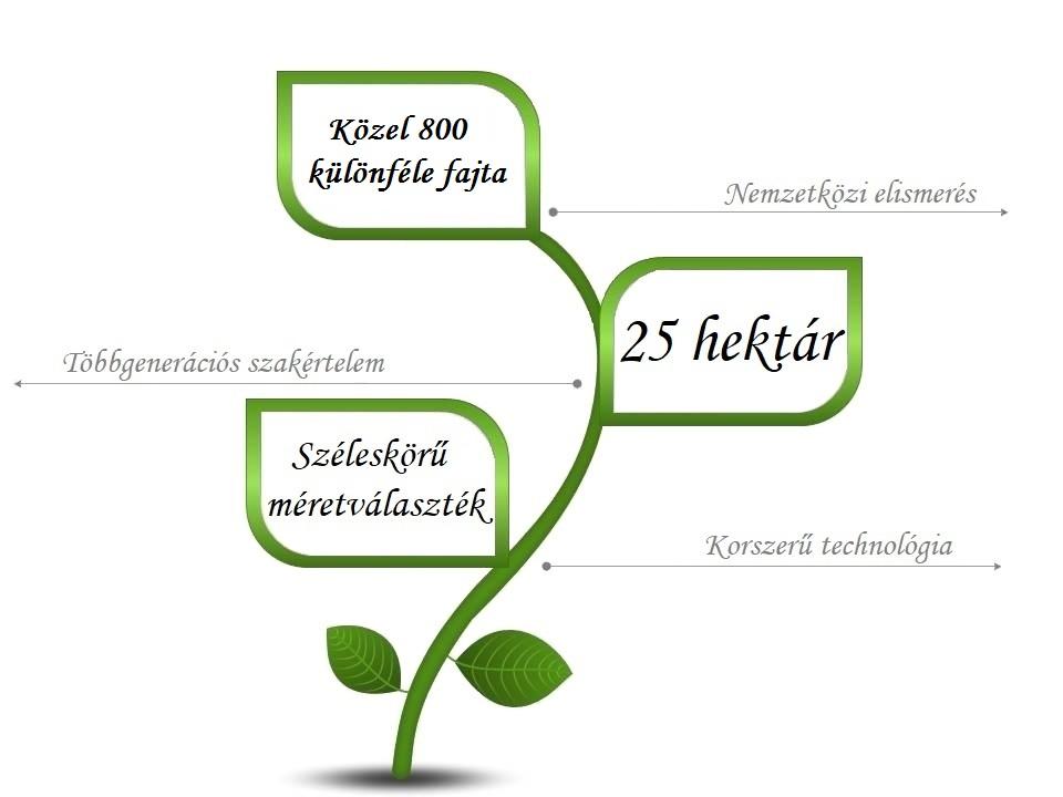 magyar-infograf-1-1